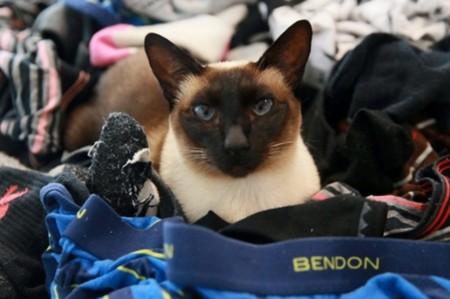 В Новой Зеландии кошка воровала у соседей мужские трусы и носки