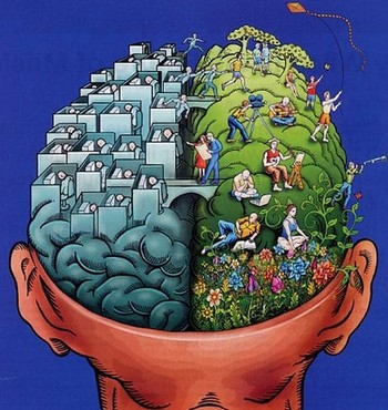 """Деление мозга на """"логическое"""" и """"эмоциональное"""" полушария оказалось мифом"""