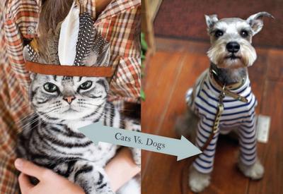 Кто сильнее любит своих хозяев - кошки или собаки?