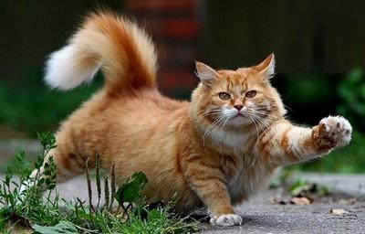Британские ученые описали 25 признаков страданий кошек