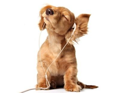 Какую музыку любят собаки?