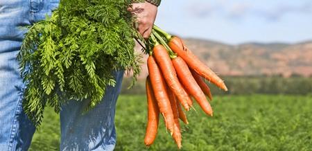 Вегетарианство и секс - мужские вопросы