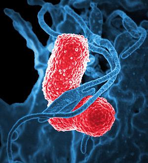 Cписок самых опасных супербактерий в мире