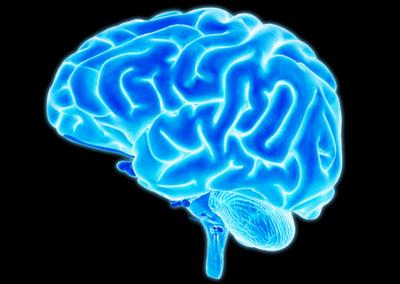 Назван источник сознания в мозге человека