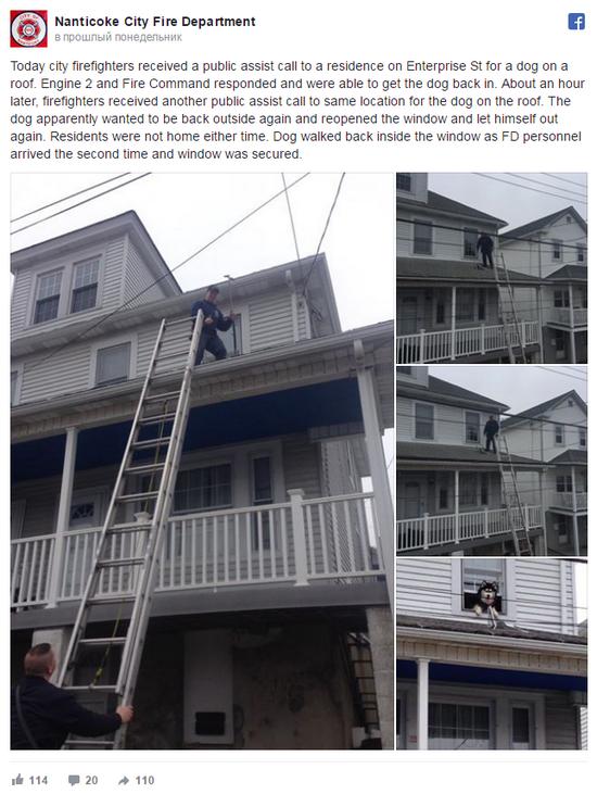 Пожарным пришлось дважды снимать любопытного хаски с крыши