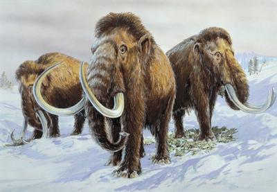 """Ученые собираются """"воскресить"""" мамонтов через два года"""