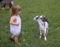 Знакомство малыша с миром животных