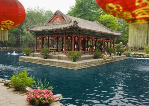 Пекин с удивлением на лице